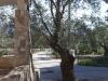 Villa Amedeo - Esterno - Foto 04
